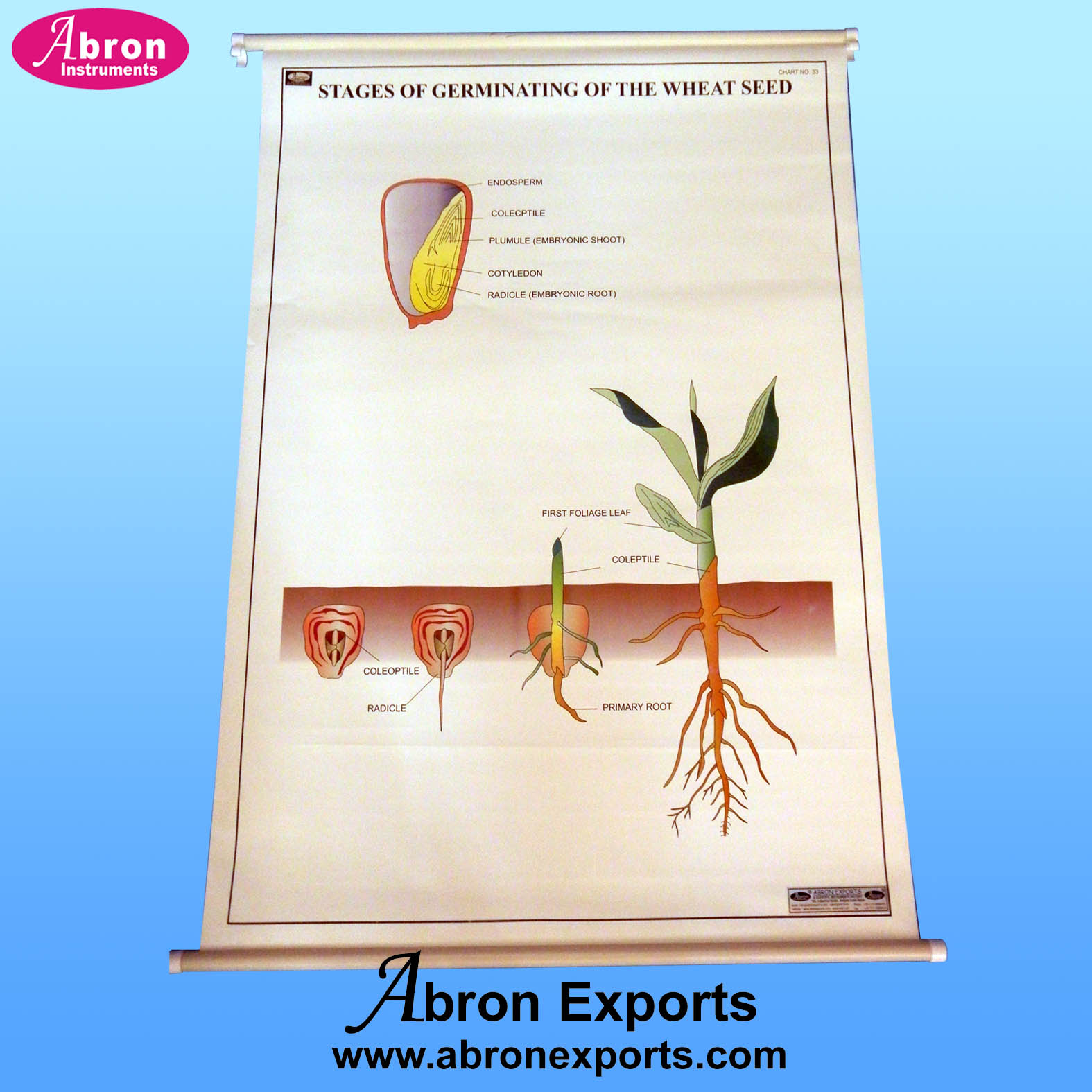 Chart Polyart Botany mitosis meiosis disease flower plant kingdom food chain germinal fruitsparts set of 10 size 75x100cm 30x40inch with roller Abron ACPBK-10k
