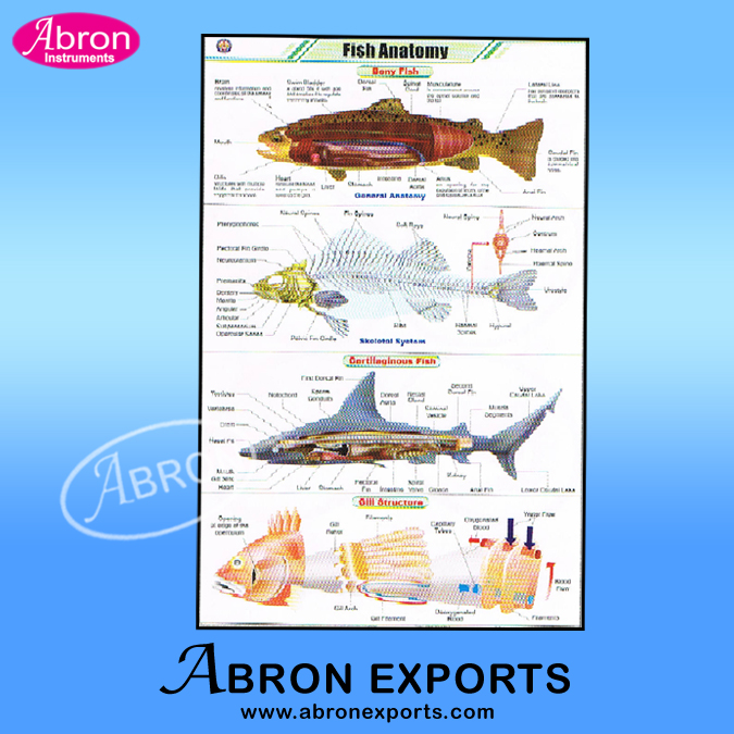 Chart Polyart Fish Pisces with Rollers Set of 20  size 75x100cm ( 30x40inch) Abron ACPF-20K