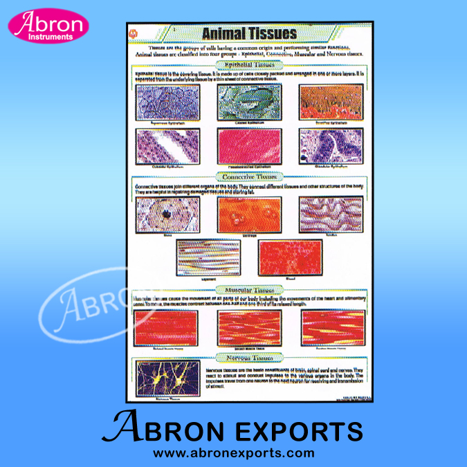 Chart Polyart Zoology Mammal Tissue and systems, Earth worm, Fron, Pigeon, Rabbit, Cockroach, pigeon animals parts systems with roller set of 60  size 75x100cm ( 30x40inch) Abron ACPZ-60K