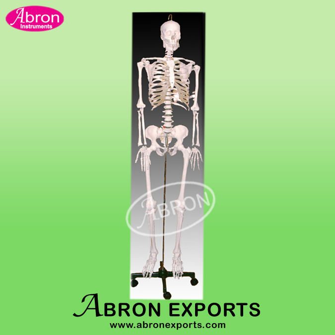 Skeleton (imported) ..