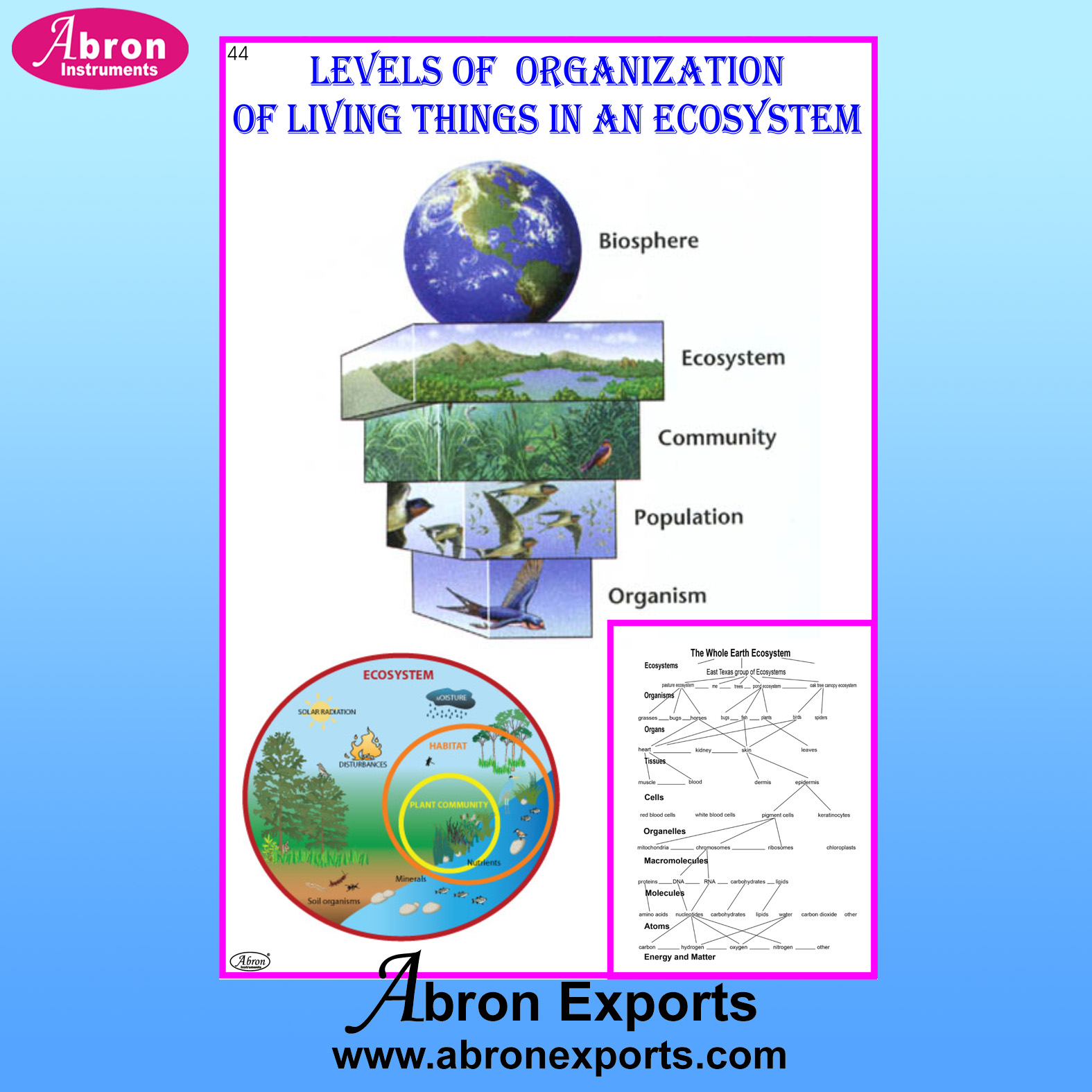 Chart Laminated Levels of Organization of Living Things in An Ecosystem