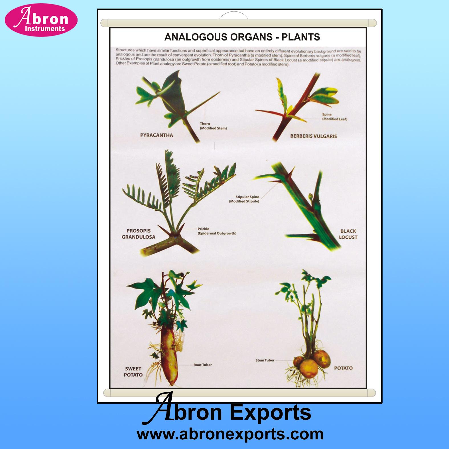 Chart gertics & evolution pedigree analogous organs plants abron
