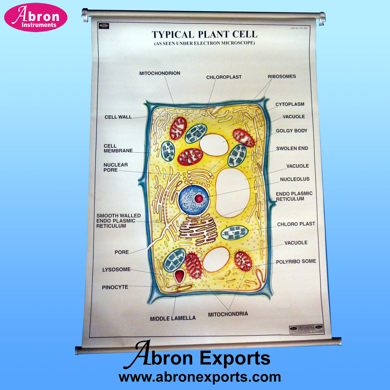 Charts Botany Plant Typical Cell plastic sheet with roller AC-230-PB33