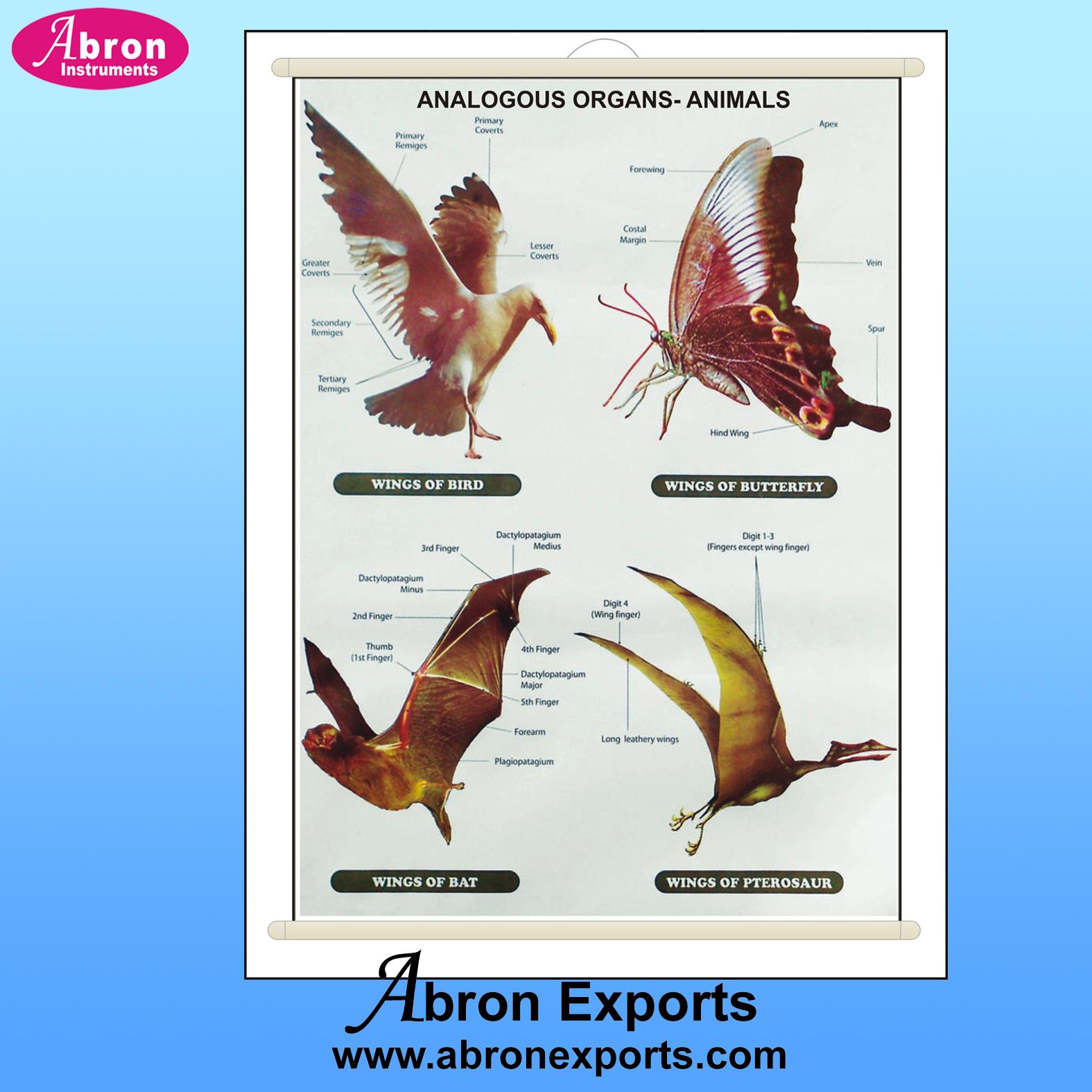 Chart evolution analogous organs animals wings bat birds butterfly similar abron AB-202EAP