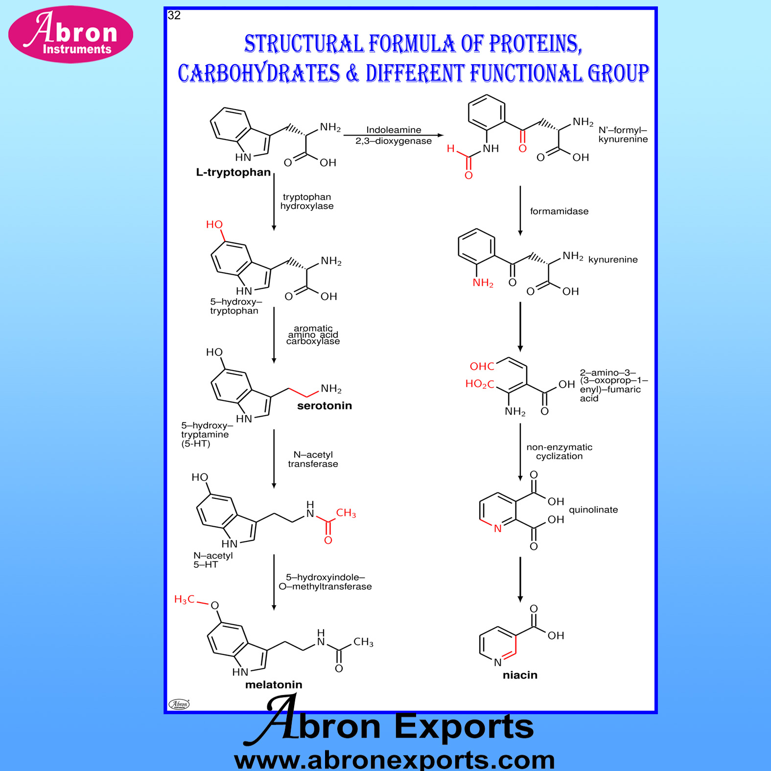 Chart Laminated Formula of Proteins Carbohydrates