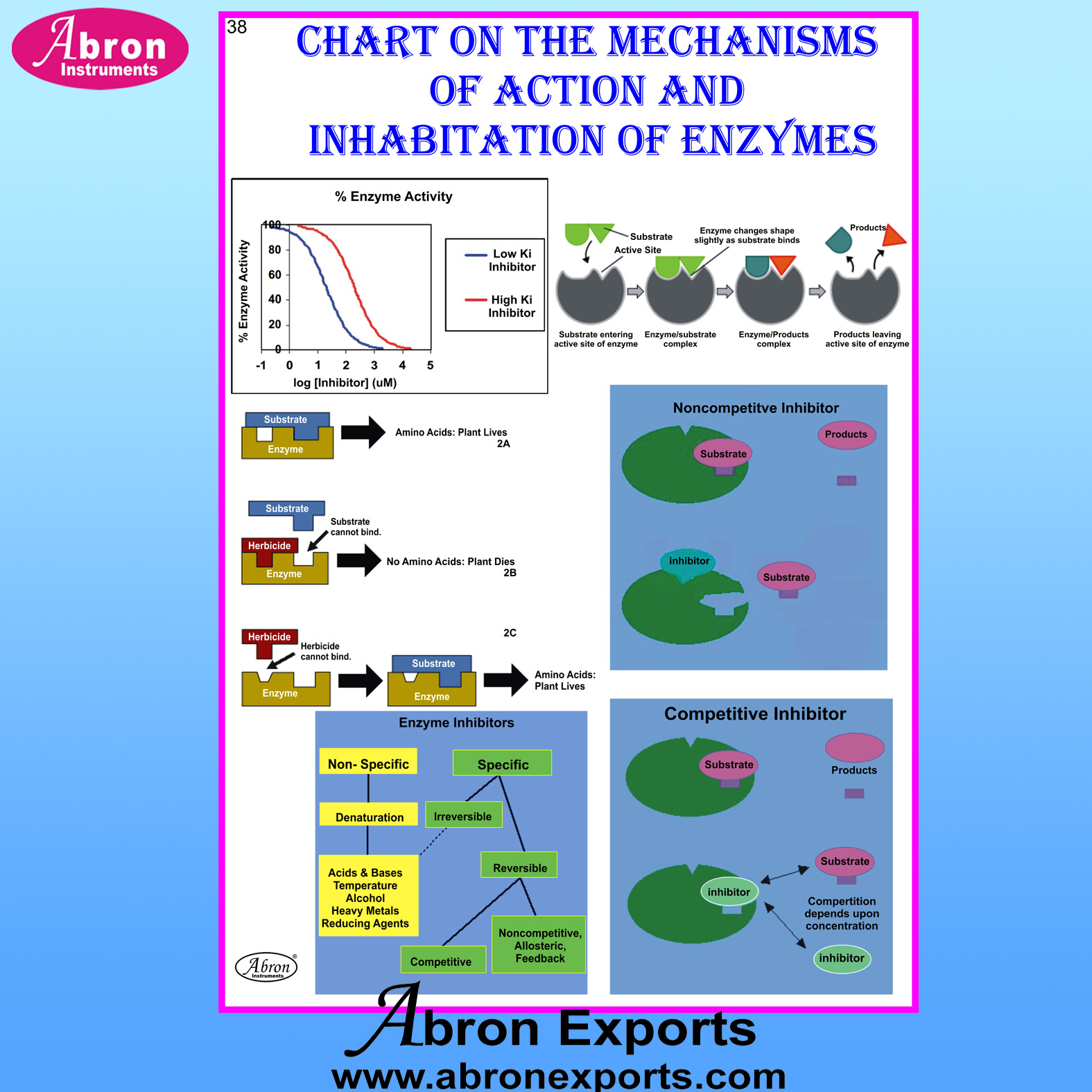 Chart Laminated Cell Mechanisms of Action & Inhabitation of Enzymes