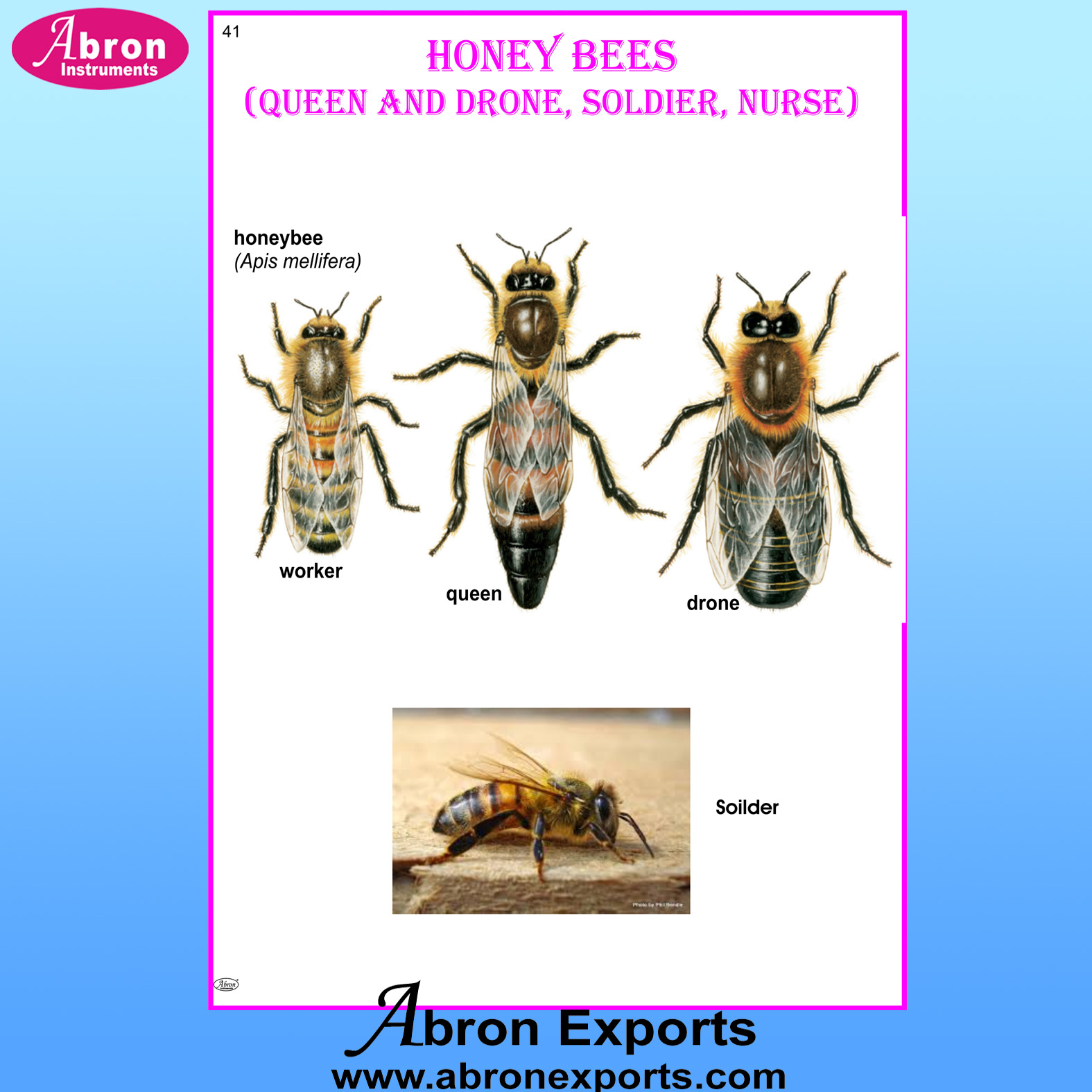 Chart Laminated Honey Bees  (Queen and Drone, Soldier, Nurse)