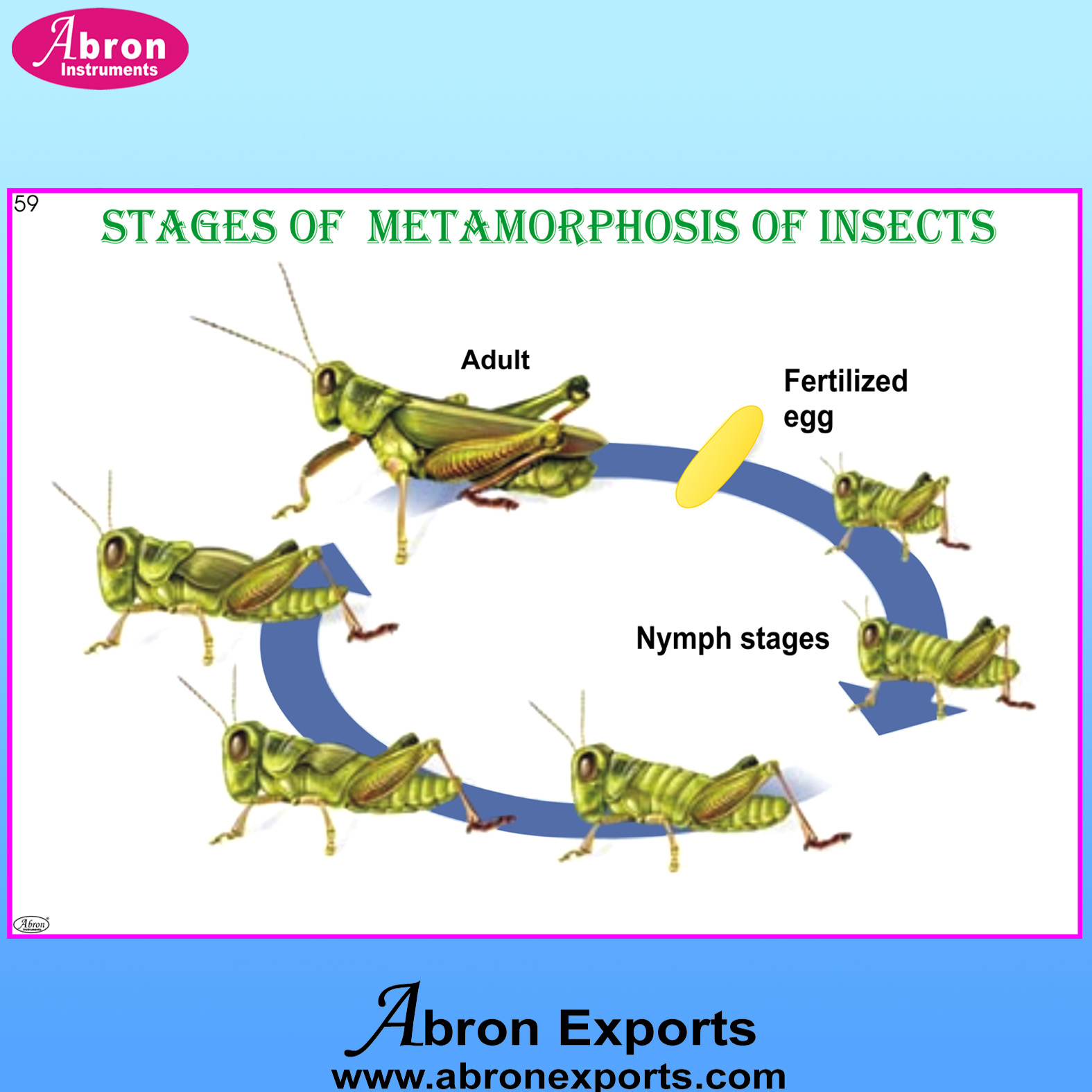 Chart insects stages..