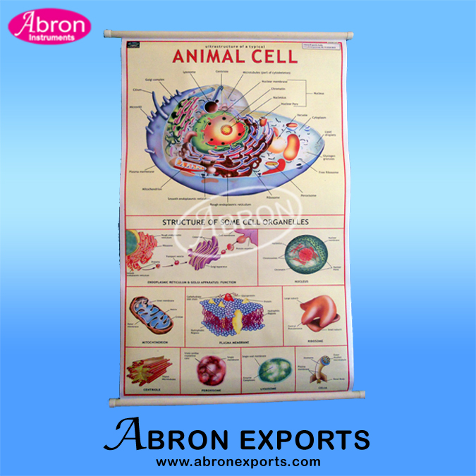Charts Zoology Animal Typical Cell plastic sheet with roller AC-239-PZ80