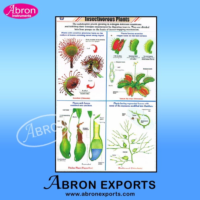 Botany Charts Paper Laminated 55 x 90 cms with Roller