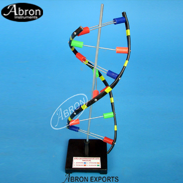 Model dna helix on s..